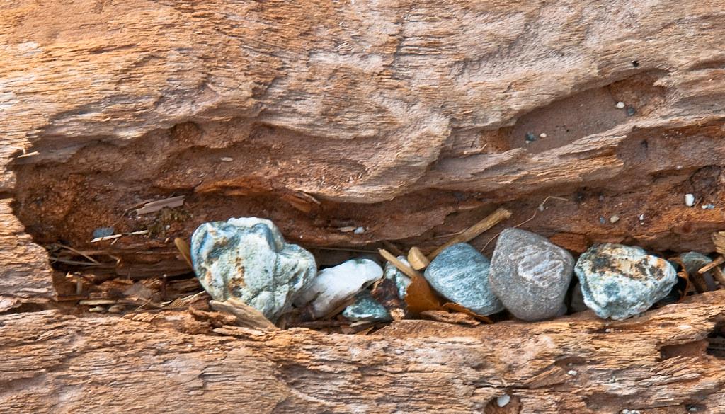 driftwood & stones