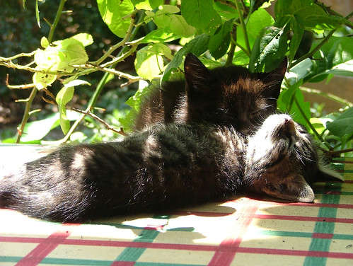 sunbathing or sleeping?2