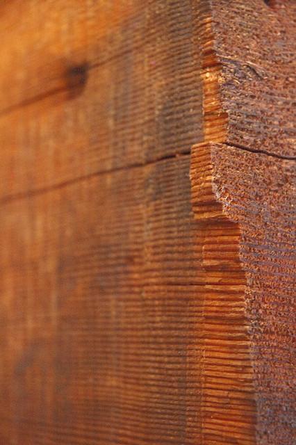 Big Basin Redwood Tree Rings