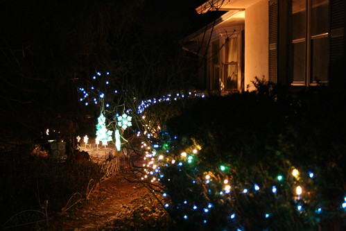 White, blue and aqua lights grace the hedges