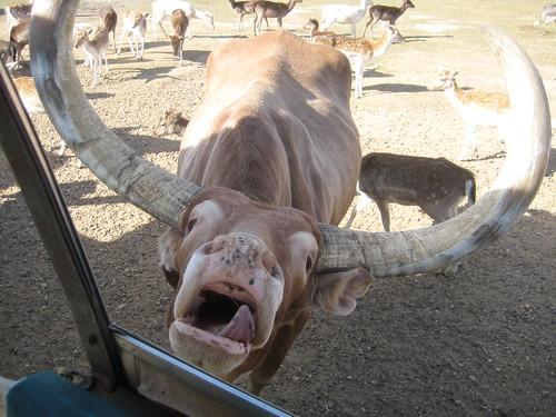 animals 021