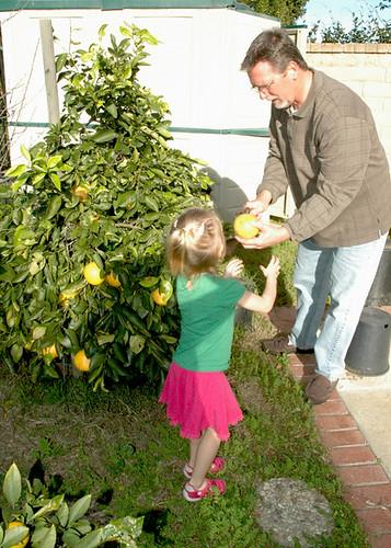 Picking Grapefruit