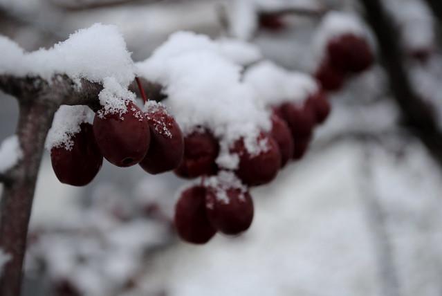 [359/365] Berries