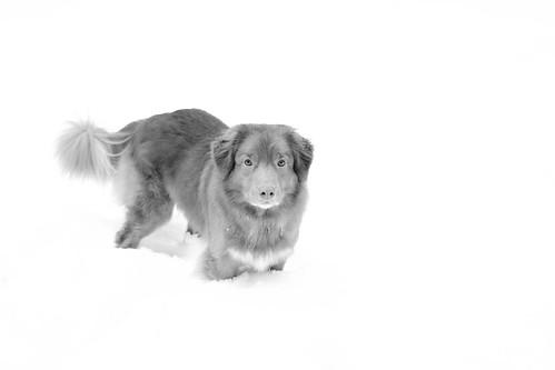 SnowTay011211-31