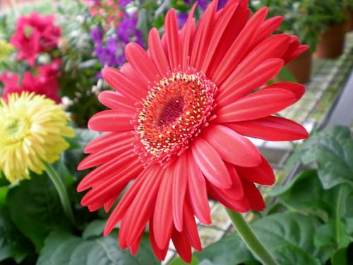 Cameron flora 3