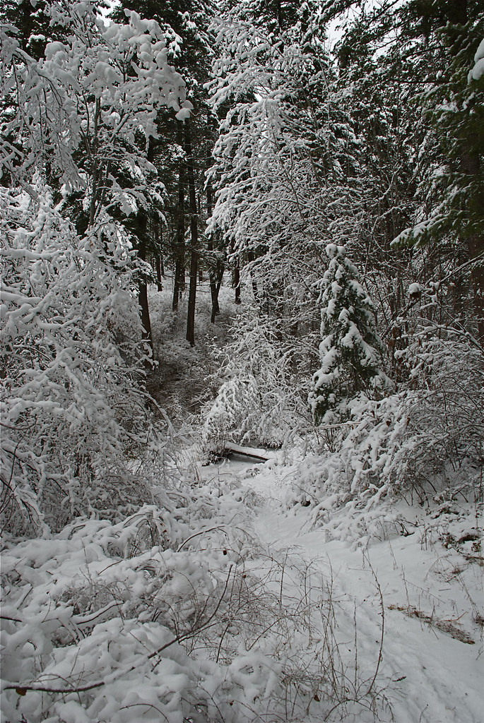Munson Creek trail in winter