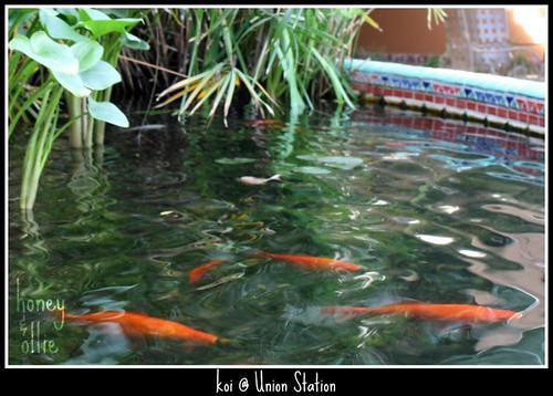 Koi at Union Station