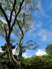 樹 & 空