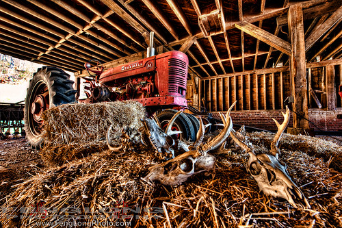 Tractor on the Farm at Biltmore Estate HDR