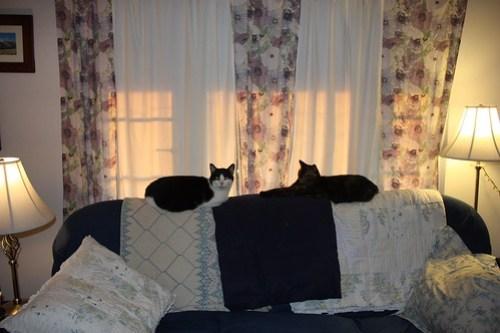 Balanced Cats