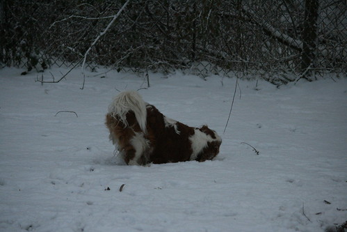 The Dogs in Snow