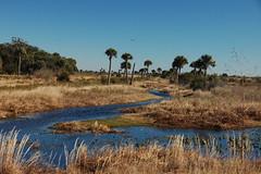 Kissimmee Prairie Wetlands