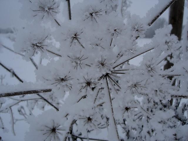 schnee-sterne