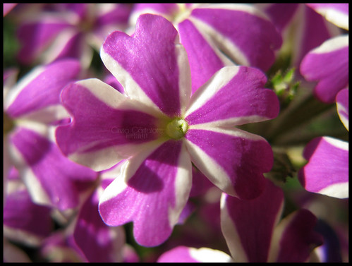 Sprazzi di primavera by [Piccola_iena]