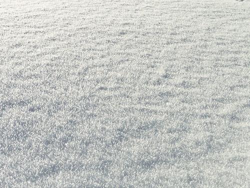 hairy snow