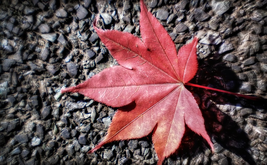 Red Leaf Enlightenment
