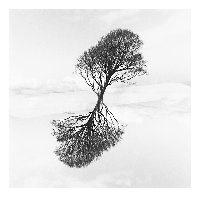 Tree Merge - CPA - Charity Print Auction