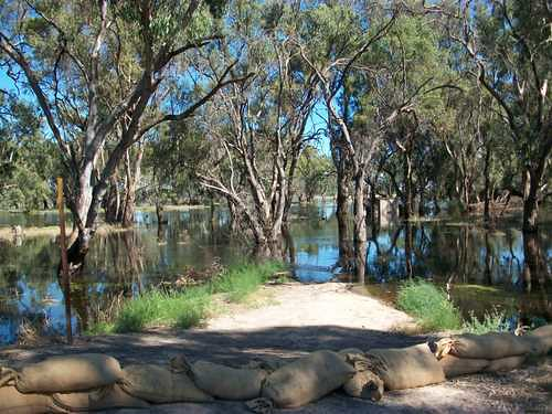 Pental Island - Little Murray River