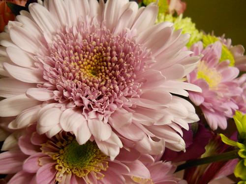 vday flowers V