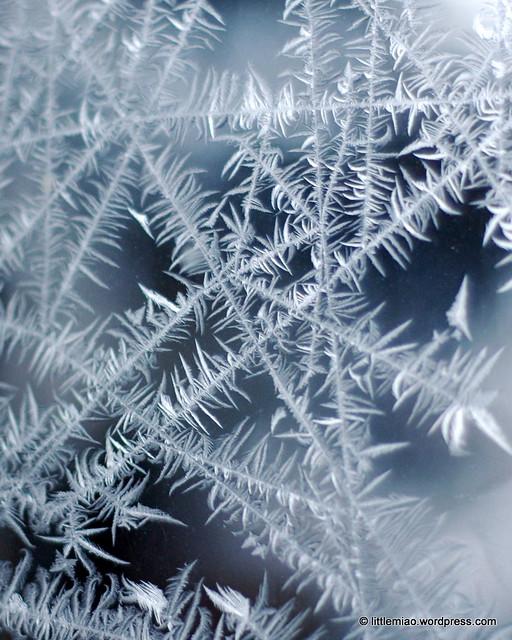 ice windows 2-2-2011 7-33-56 AM