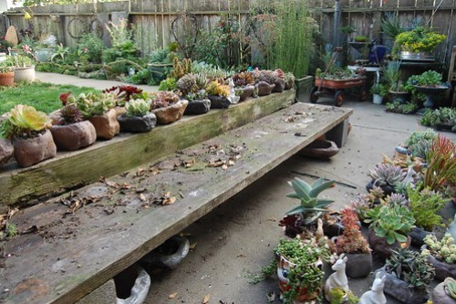 Succulent bench.