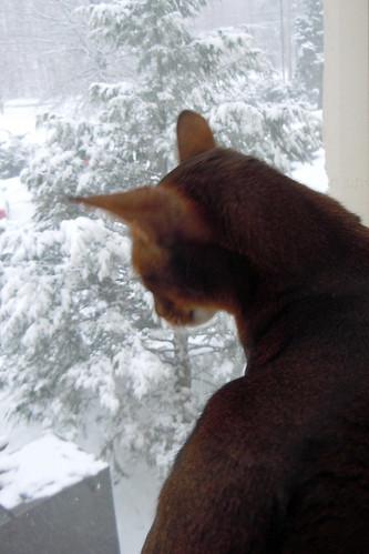 jake-snowmilfordshow2548