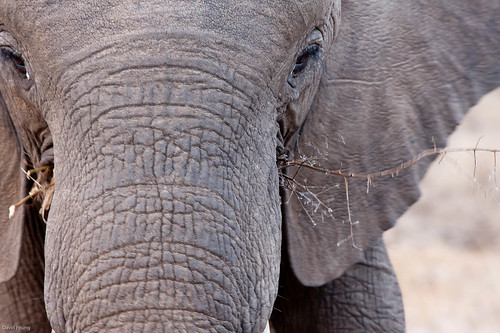 baby elephant lunching
