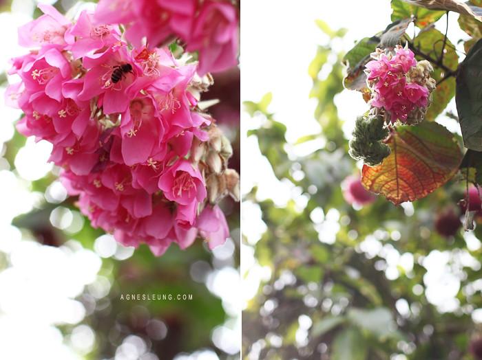 tree-flower2