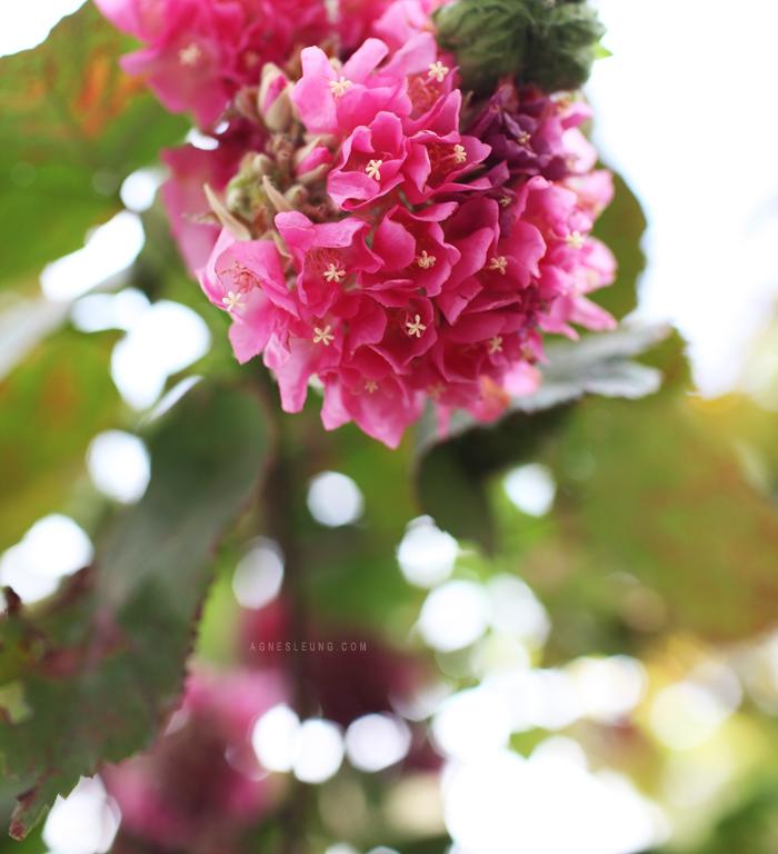 tree-flower