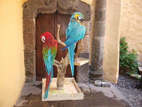 Parrots at Gran Canaria