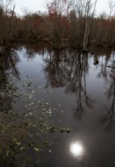 Chickahominy Landscape