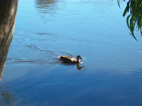 Madly paddling