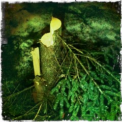 No!! WHO Killed My Xmas Tree?!
