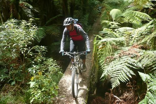 Stuart crosses the Whirinaki track's treetrunk bridge