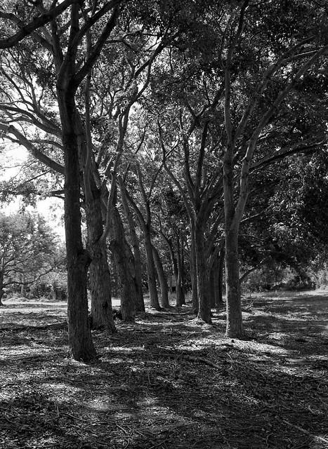 Tree Corridor, Analog Edition