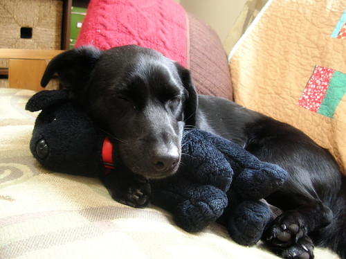 Simon sleeping on T