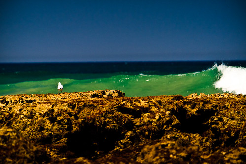 gull on rocks by Matt Hovey
