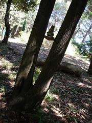 Balancing between the trees
