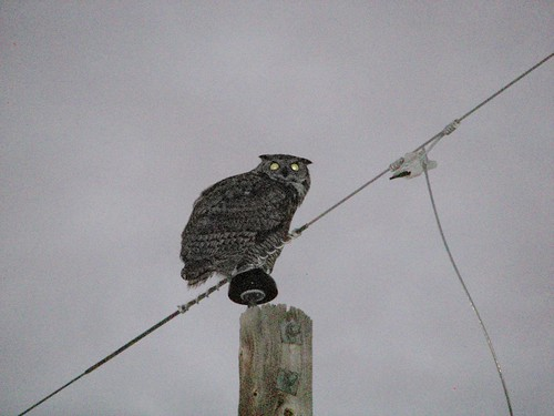 Owl outside my casita