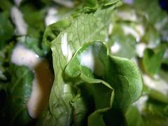 hm dressing lettuce