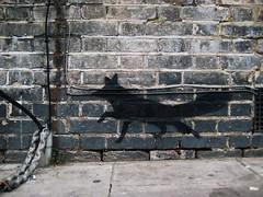 YA Maida Vale fox