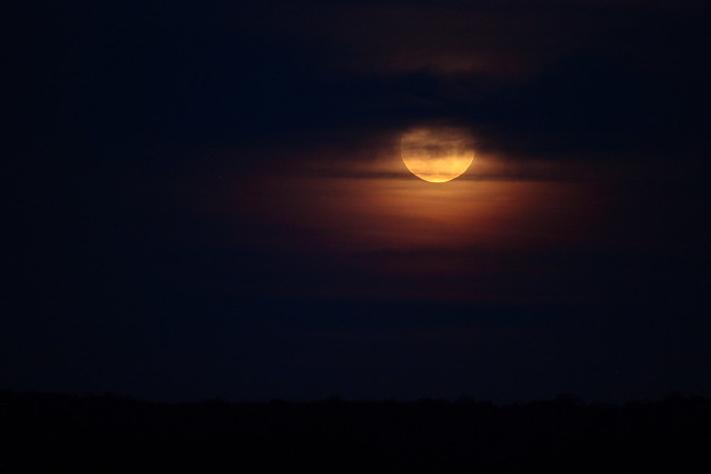 Full Moon: March 19,2011 - Pic 2
