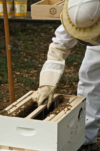 Adding frames back into the hive