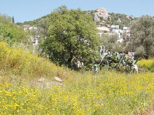 201104240056_wild-flowers