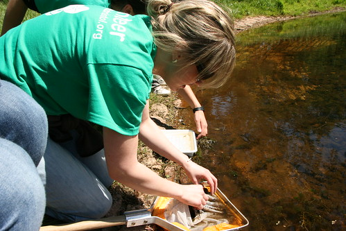 Becky identifying freshwater invertebrates