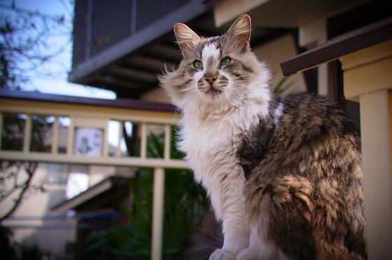 20110412_cat-toymode