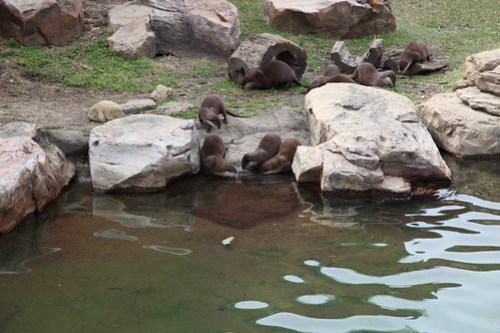 Otters!