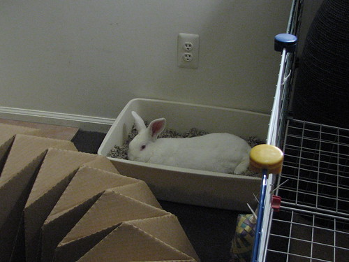 gus napping in his litterbox