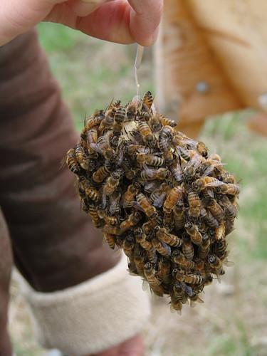 BeesQueenBox