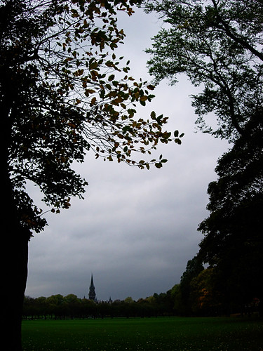 Trees-on-a-cloudy-day